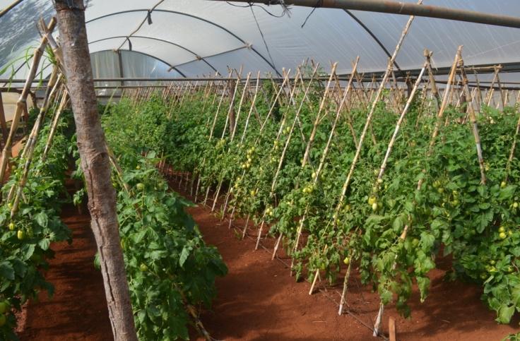 Producción de alimentos en Colonia Primavera de El Soberbio10